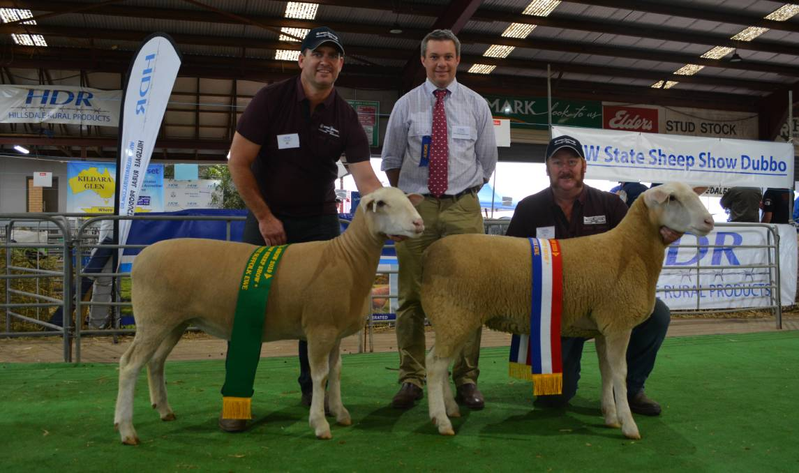 Reserve champion White Suffolk ewe, Rene 31/18