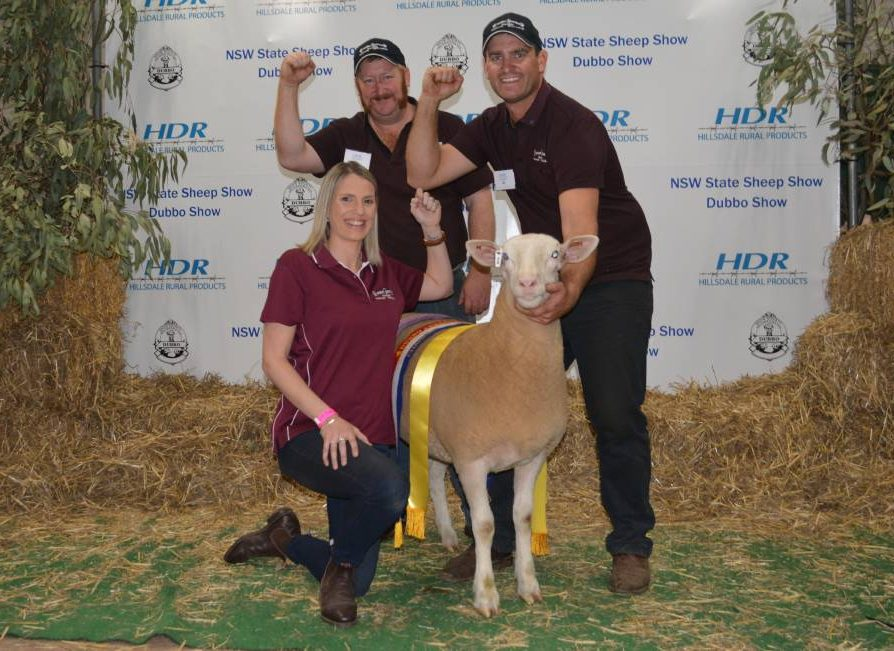 Supreme White Suffolk exhibit with their grand champion ewe Rene 27/18