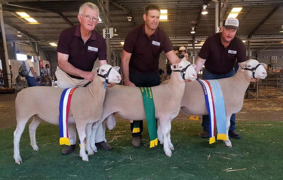 Canberra Royal Show Results for Rene Stud 2019