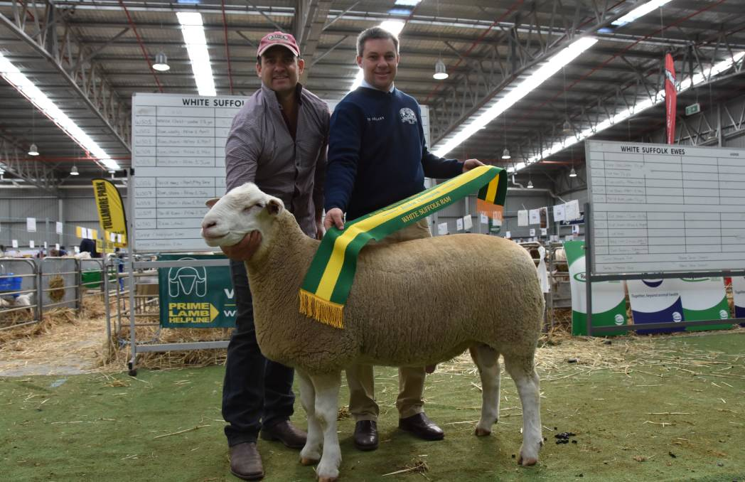 Scott Mitchell, Rene stud, Culcairn, NSW, holds the senior and grand champion ram with judge Chris Badcock, Tas.