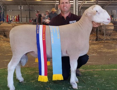 Royal Canberra Show 2019