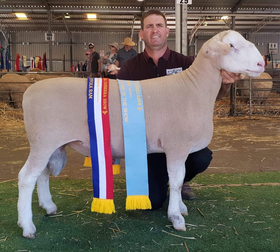 Champion WS Ram, Supreme Champion White Suffolk and Supreme Champion Shortwool Ram of Show