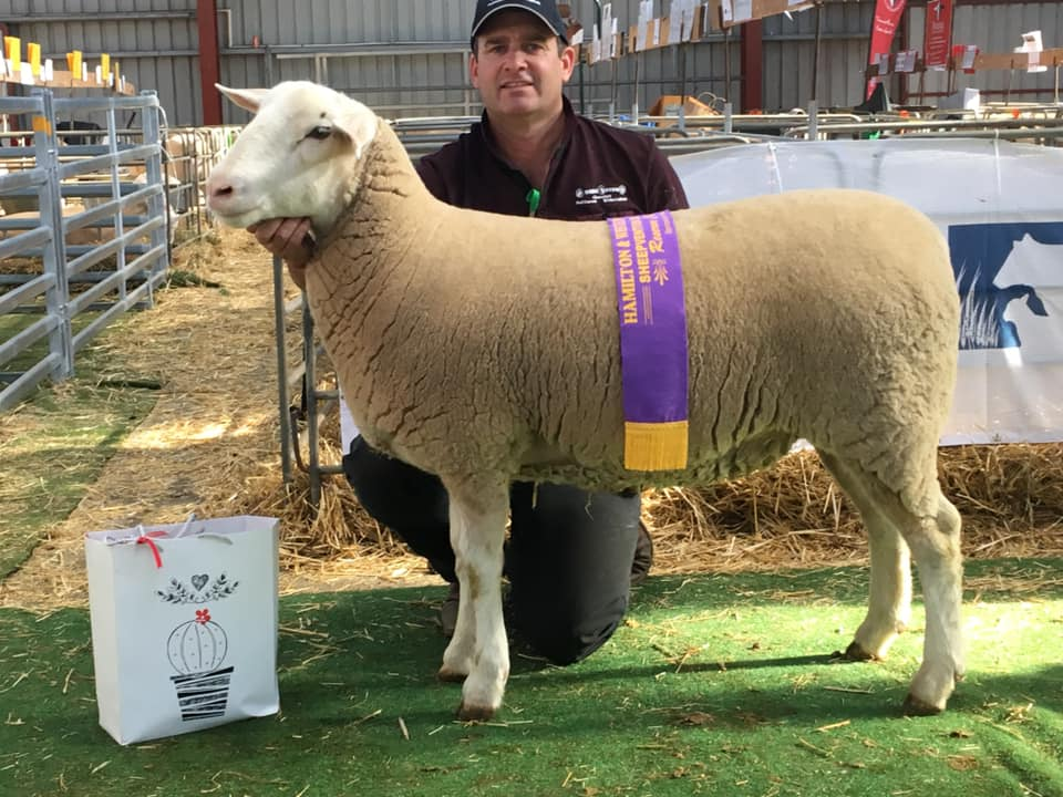 Reserve Champion Ewe (27.18)