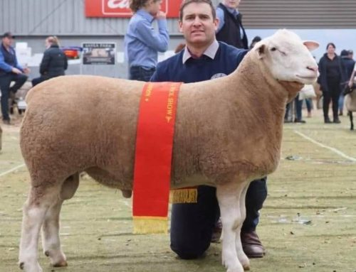 Bendigo Sheep & Wool Show 2018