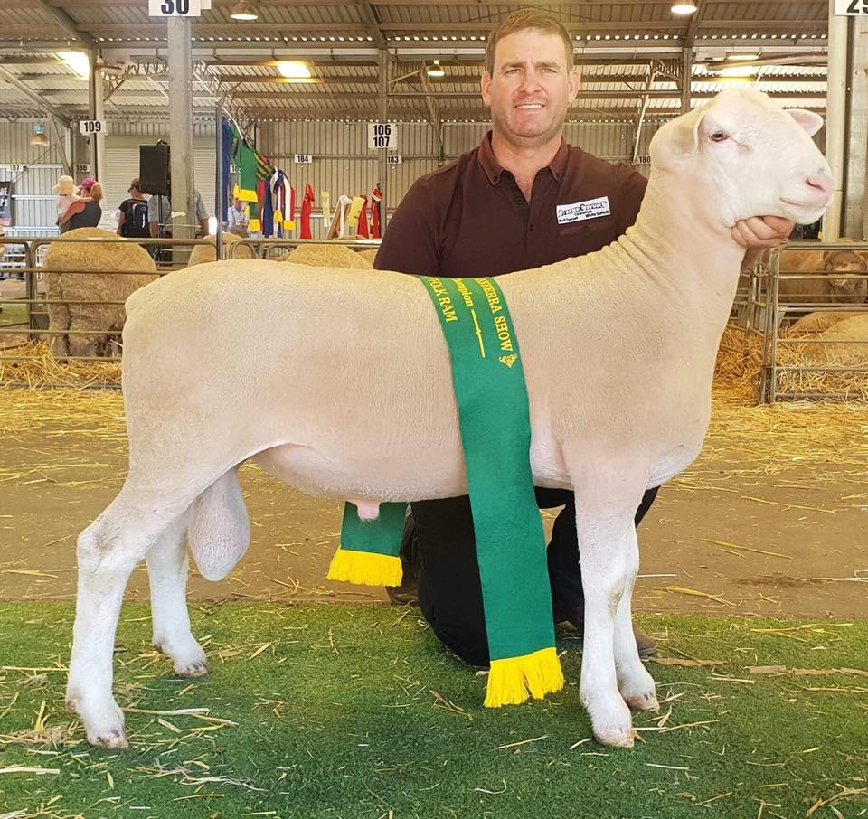 Reserve Champion WS Ram