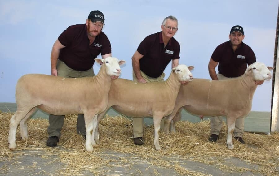 White Suffolk breeders group awarded Reserve Supreme Group of the show.