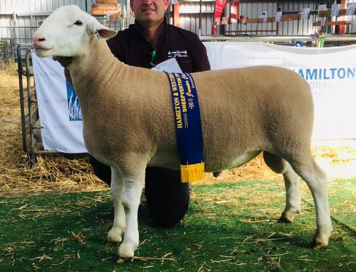 Hamilton Sheepvention 2019
