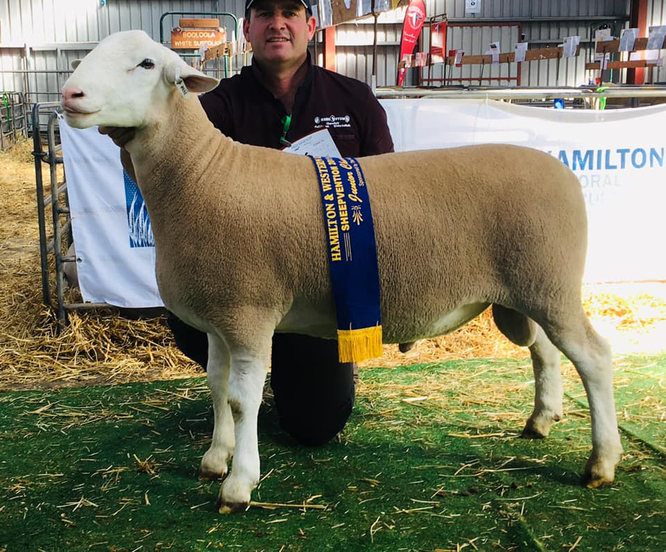 Junior Champion Ram (126.18)